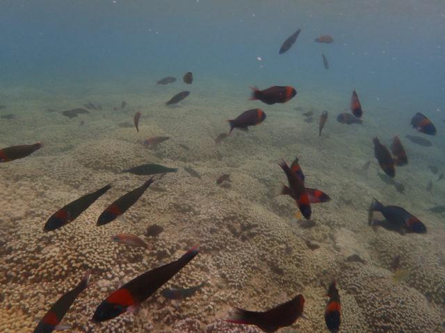 小魚いっぱい!赤い!